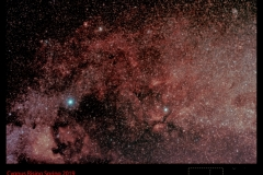 Cygnus Rises in the Spring